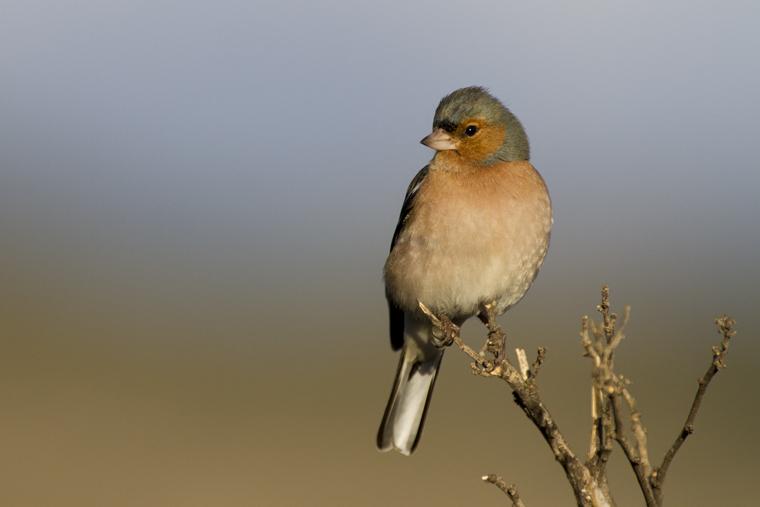 Avistamiento de aves. Hospedería Bajo el Cejo